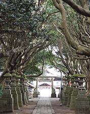 酒列磯前神社(椿の参道)